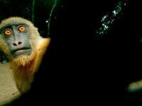 Смешные обои на рабочий стол с обезьяной