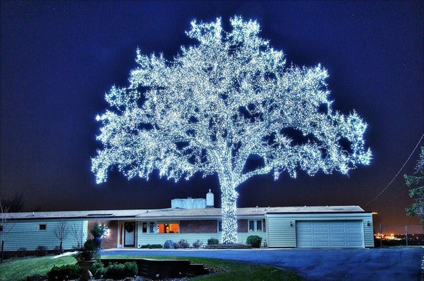 40000 светодиодов и чудо-дерево готово!
