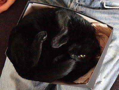 Как упаковать котэ
