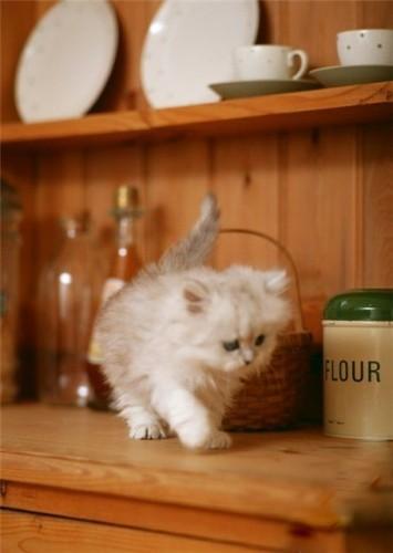 Жизнь плюс кошка