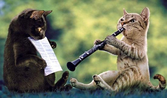 Котэ и музыка