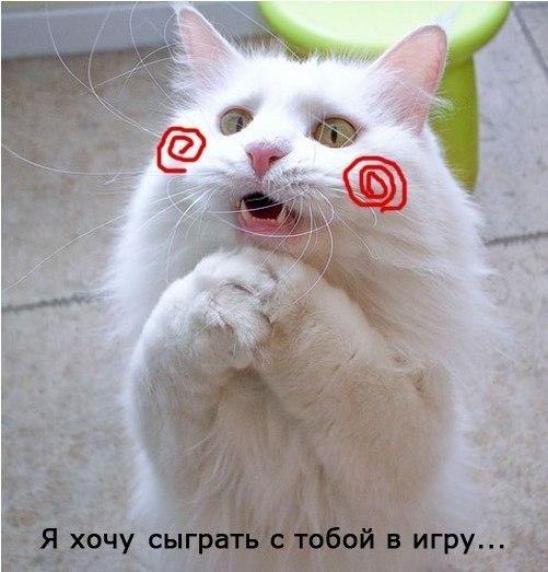Прикол про кота - пилу