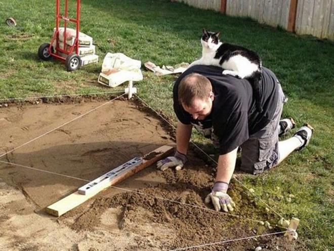 Когда кот - хозяин в доме