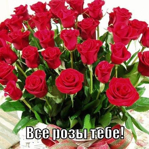 Все розы тебе!
