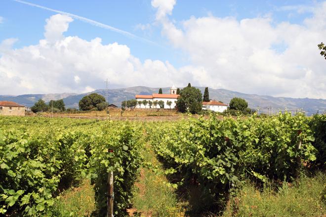 Винный фестиваль в Португалии 2015 года: насладись напитком богов и потанцуй до упаду