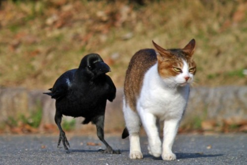 Давай, тули отседава! Чухай ногу об дорогу!!!
