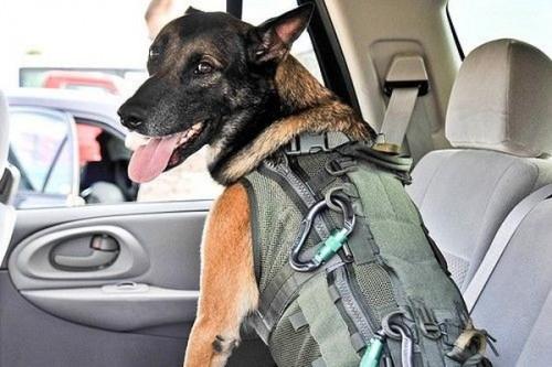 Собака парашютист