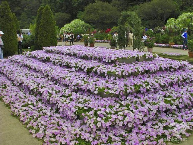 Японський Парк квітів Асікага
