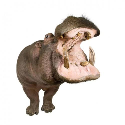 Проти паніки - проти свиней!