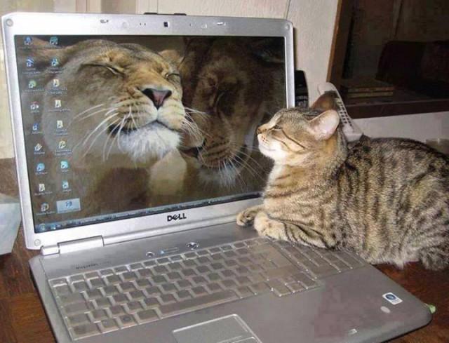 """Домашний """"лев"""" у ноутбука"""