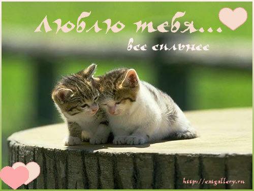 Няшная открытка с любовью
