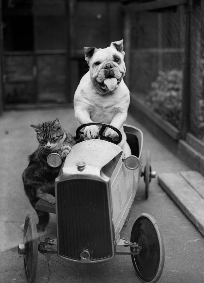 кот или собака