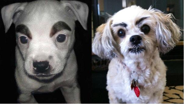 Картинки по запросу смешные собаки