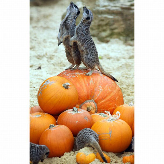 Няшки готовятся к Хэллоуину (ч.1)