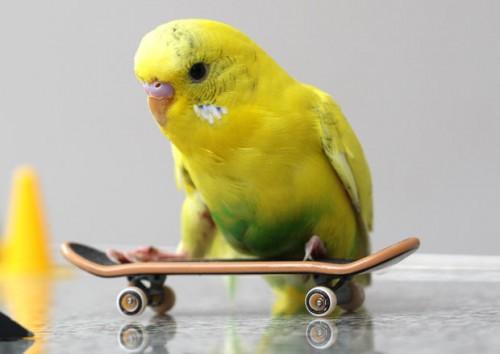 кул скейтер
