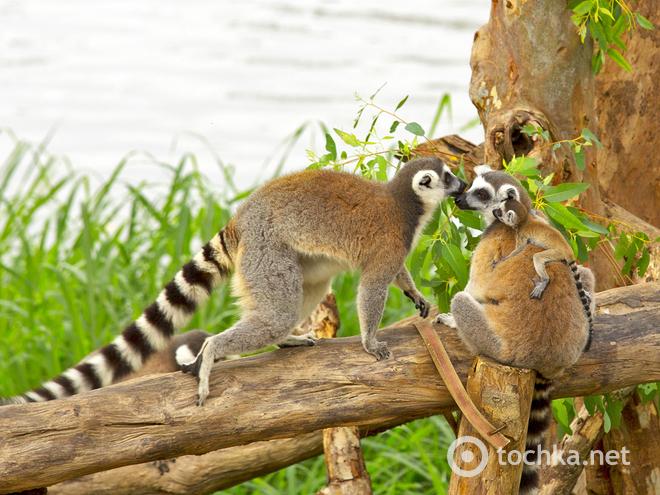 Где увидеть лемура. Мадагаскар