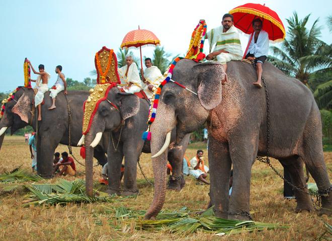 В Індії хочуть заборонити катання на слонах