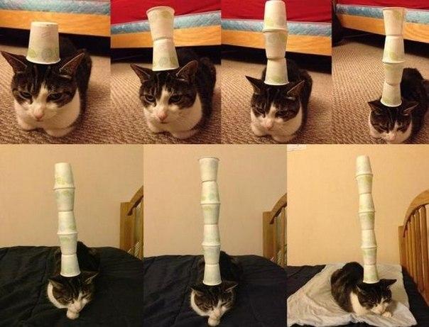 Самый терпеливый котэ в мире