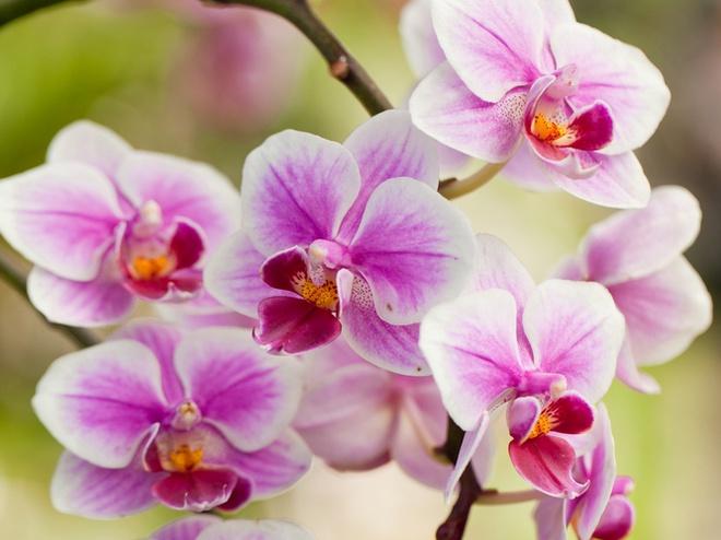 що означають подаровані квіти
