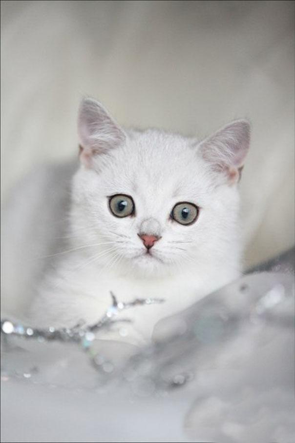 Новогодняя фотоссесия котейки