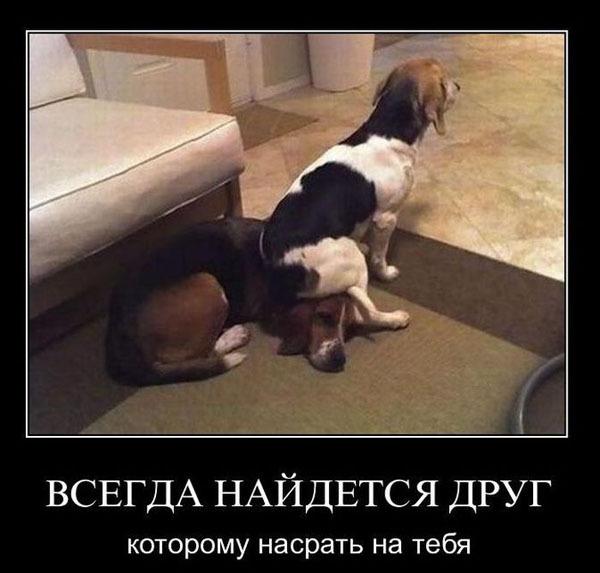 Всегда найдется друг...