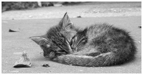 Спасем бездомного котенка