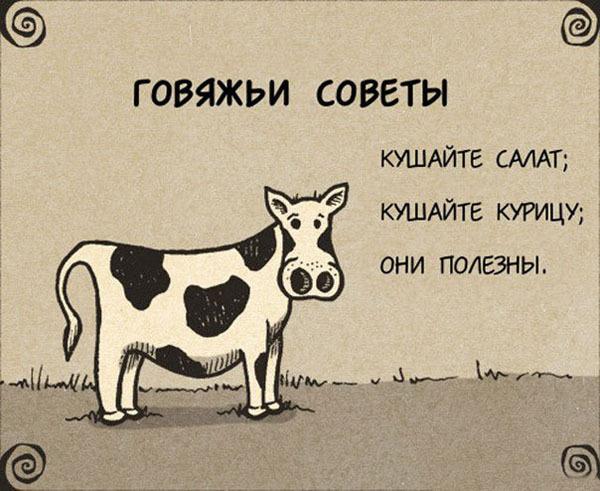 Совет дня от коровки!