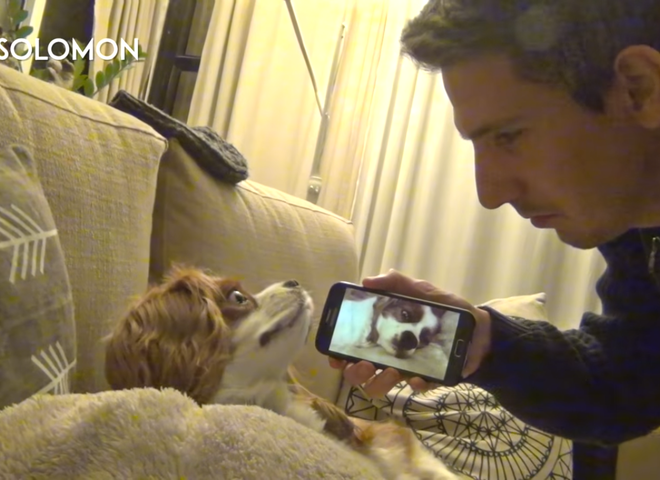 Рецепт від храпу: в Мережі набирає популярності ролик з собакою, здивованою власним храпом