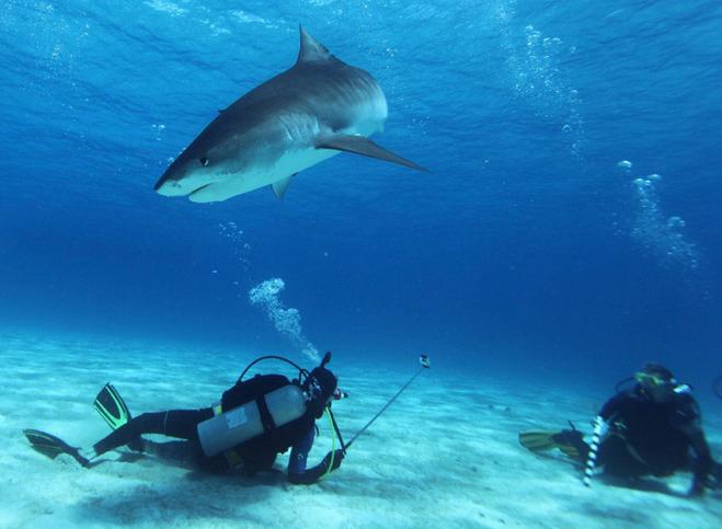 Необычный отдых: 10 самых экстремальных видов туризма