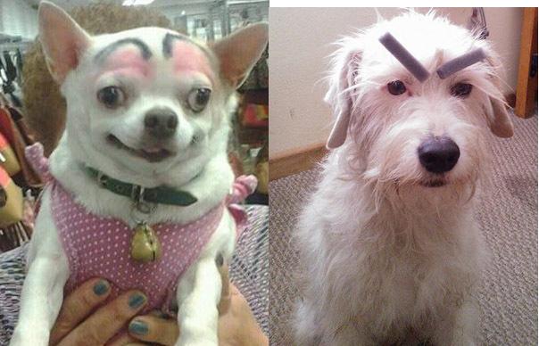 Смешные собаки с бровями
