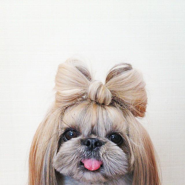 Кума - самая стильная собака