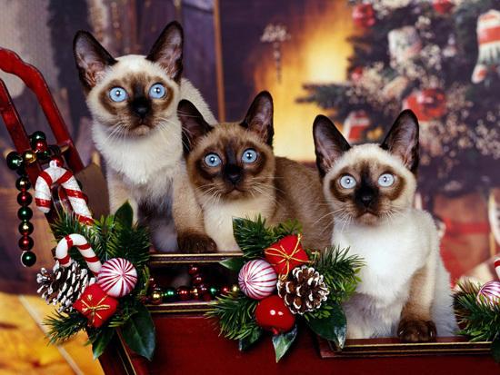 Котейки готовятся к Новому году