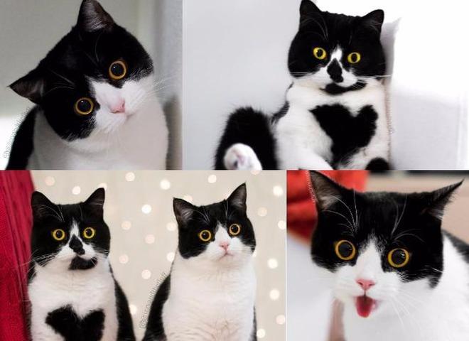 Кіт і кішка з найбільш здивованими поглядами підкорюють Мережу