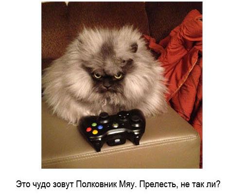 знакомства meow на айфон