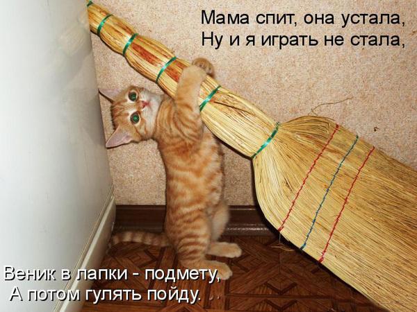 ТОП лучших котоматриц про мам