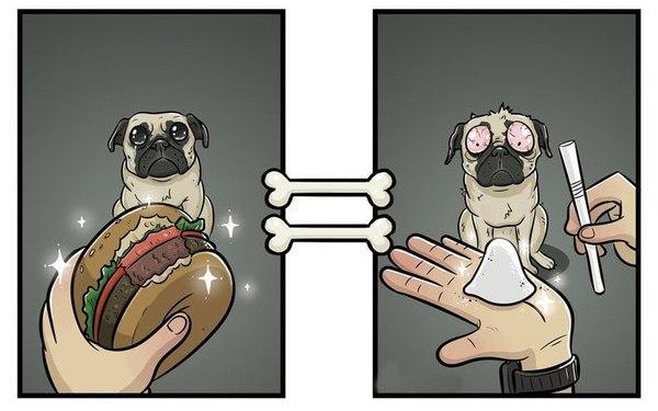 Мир глазами собак