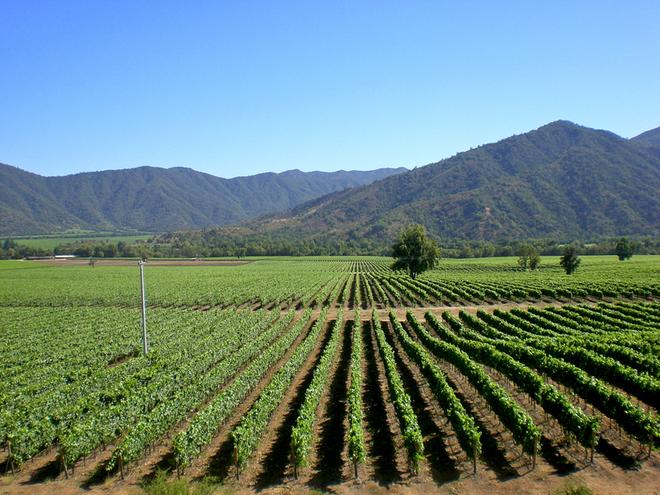 Топ-15 мальовничих виноградників світу