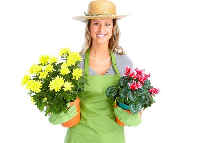 Догляд за кімнатними квітами