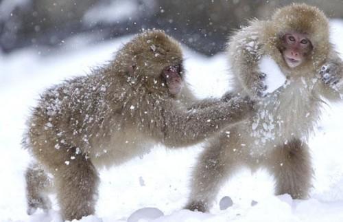 аЁ!! играем в снежки!!