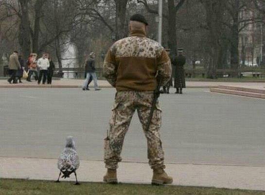 Cлужебная птица! вооружена и очень опасна!