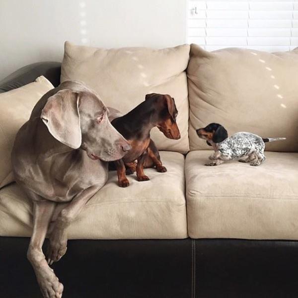 Встреча с новым жителем квартиры