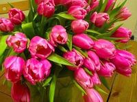 Тюльпани до Дня Народження
