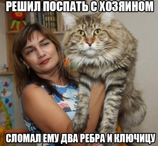 Подборка мемов про мини кота