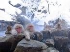 Беппу - город обезьян