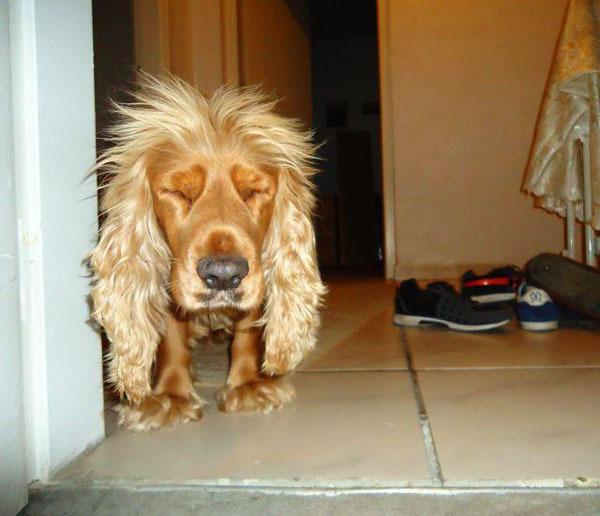 Я лев, только маленький