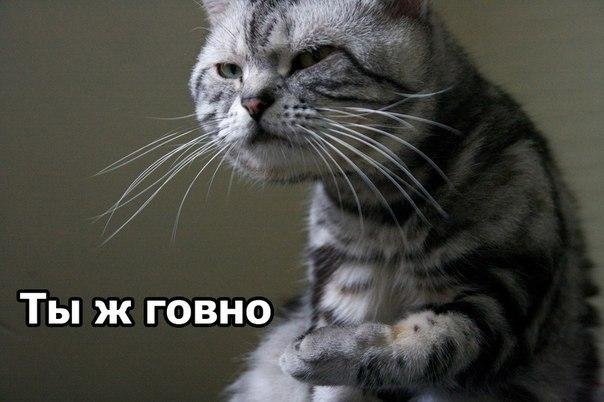 Смешные приколы про котов