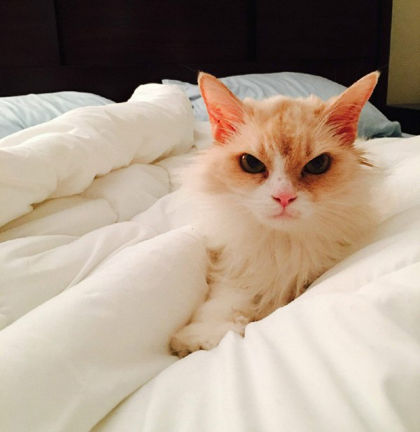 Кота забрали из приюта, он безумно рад