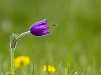 Цветок поле