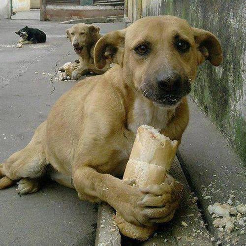 Собака-грусняшка кушает хлебушек