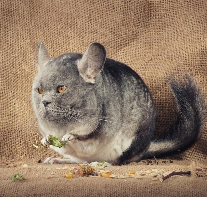 Если бы все животные были котами